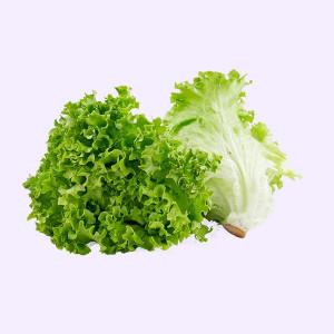 Insalata Gentilina verde